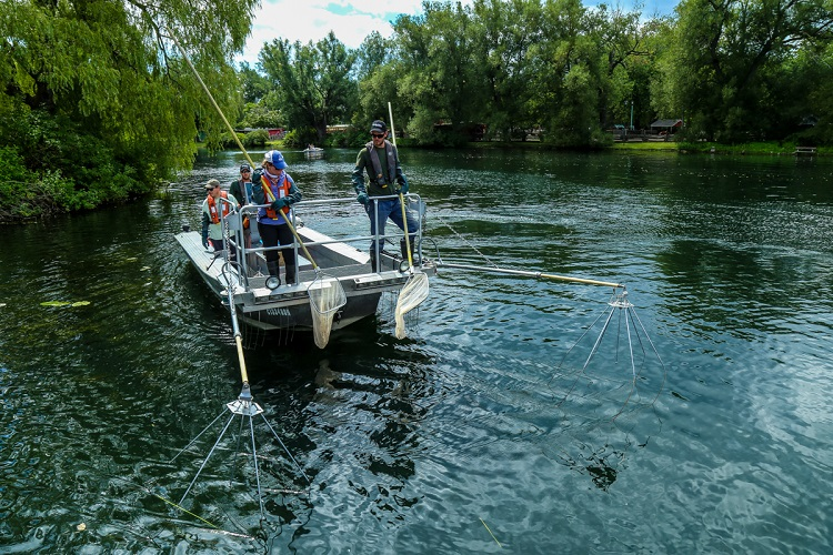 TRCA Monitoring team conducting fish tagging study in Toronto Harbour