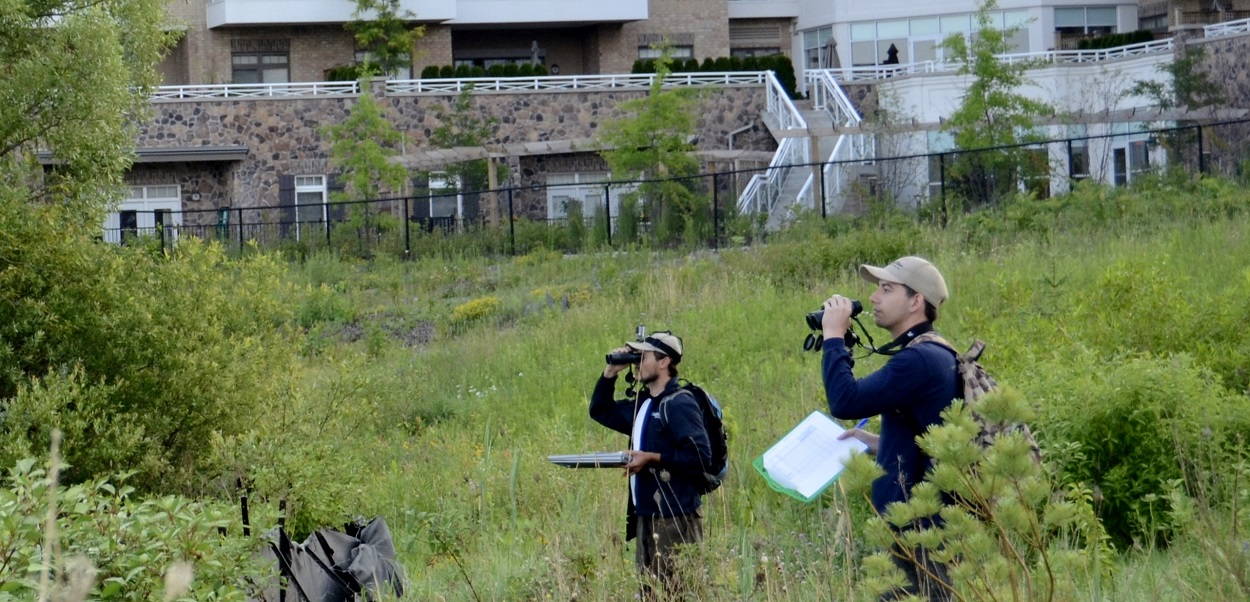 TRCA terrestrial monitoring team studying plant and animal species in a meadow area