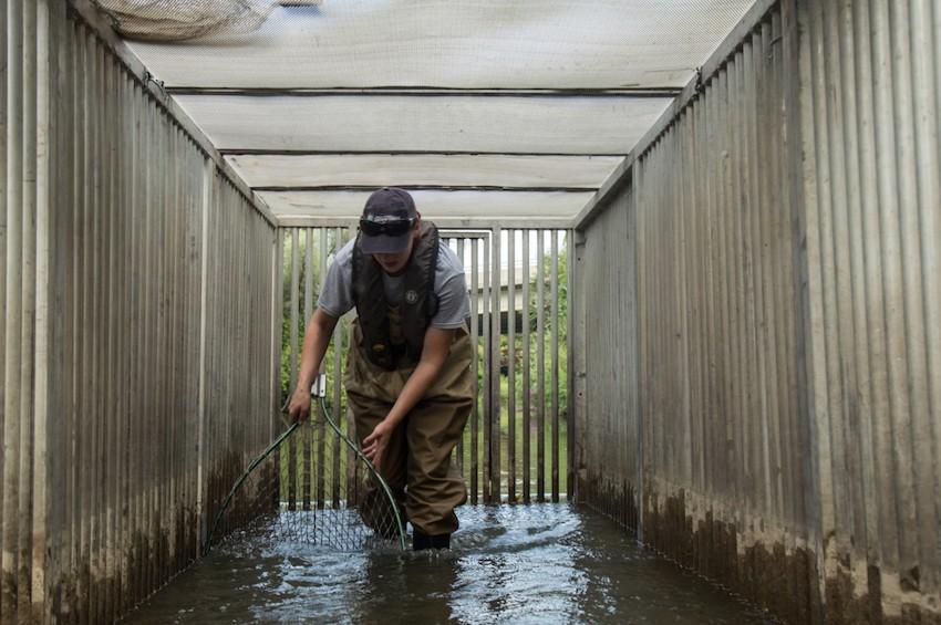 Duffins Creek Resistance Board Weir
