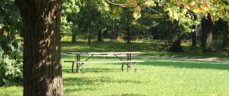 picnic table at Boyd Conservation Park