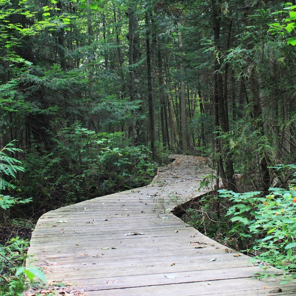 boardwalk at bruces mill conservation park
