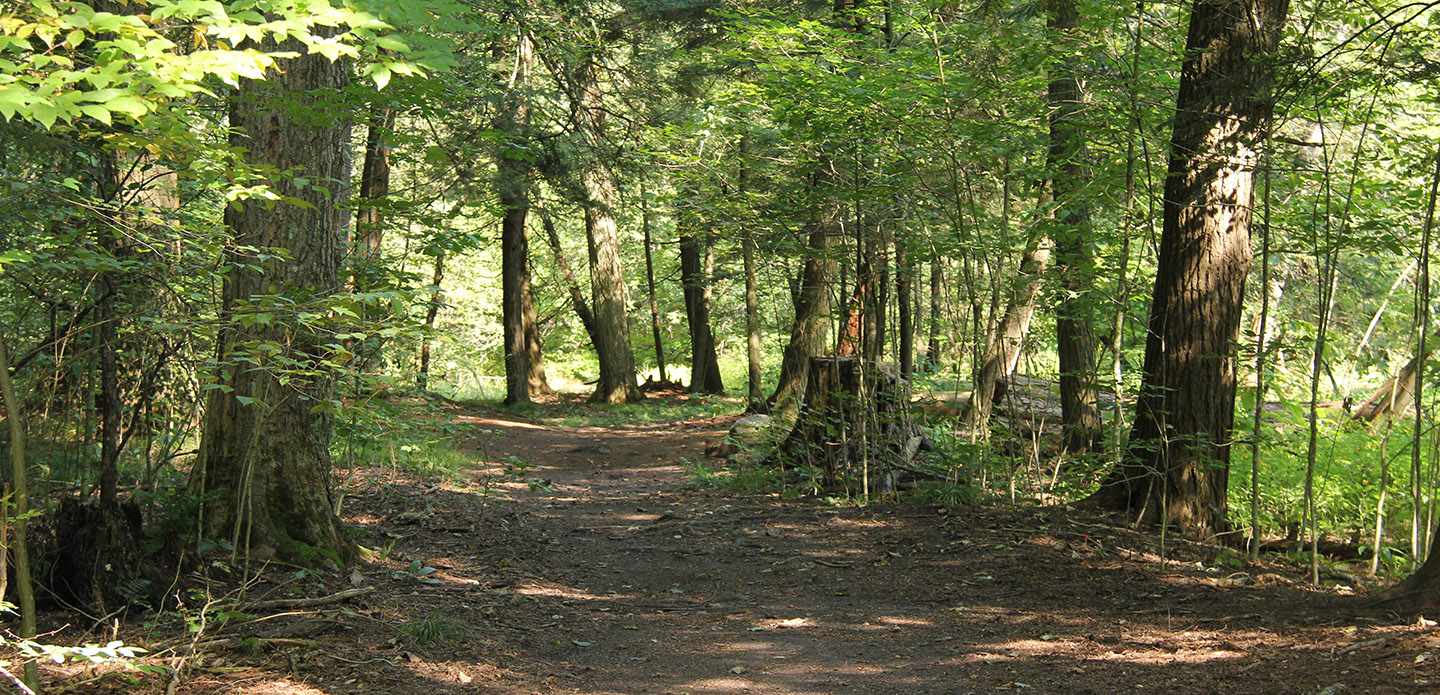 hiking trail at boyd conservation area