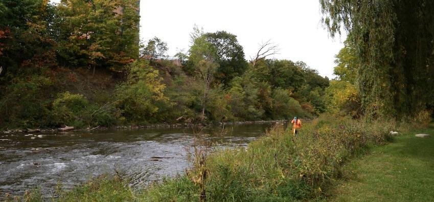 Humber River vegetation