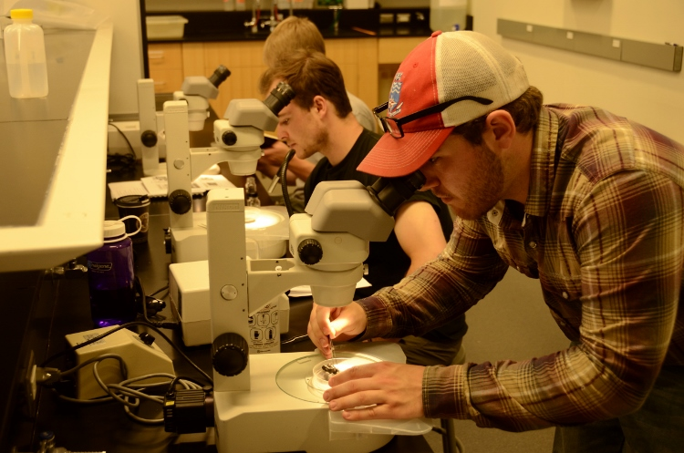monitoring professionals take part in benthos identification technical training