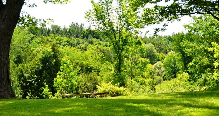 A picture of the Humber River Valley close to Nobleton, Ontario.