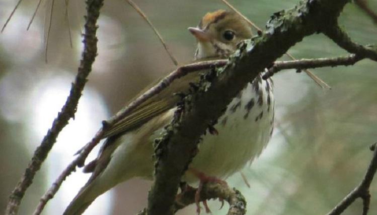 TRCA environmental monitoring breeding birds