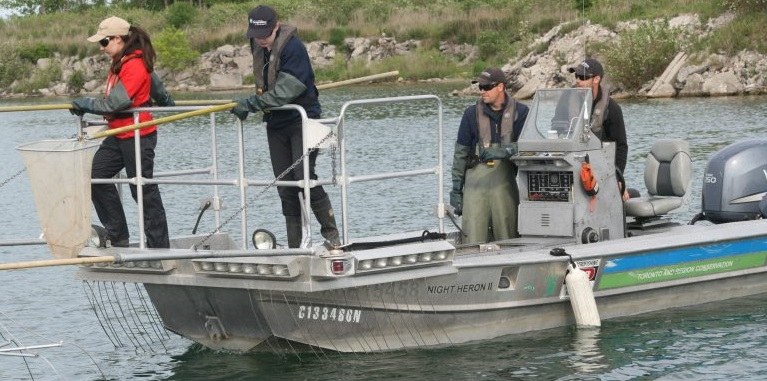TRCA environmental monitoring invasive species Asian Carp surveillance