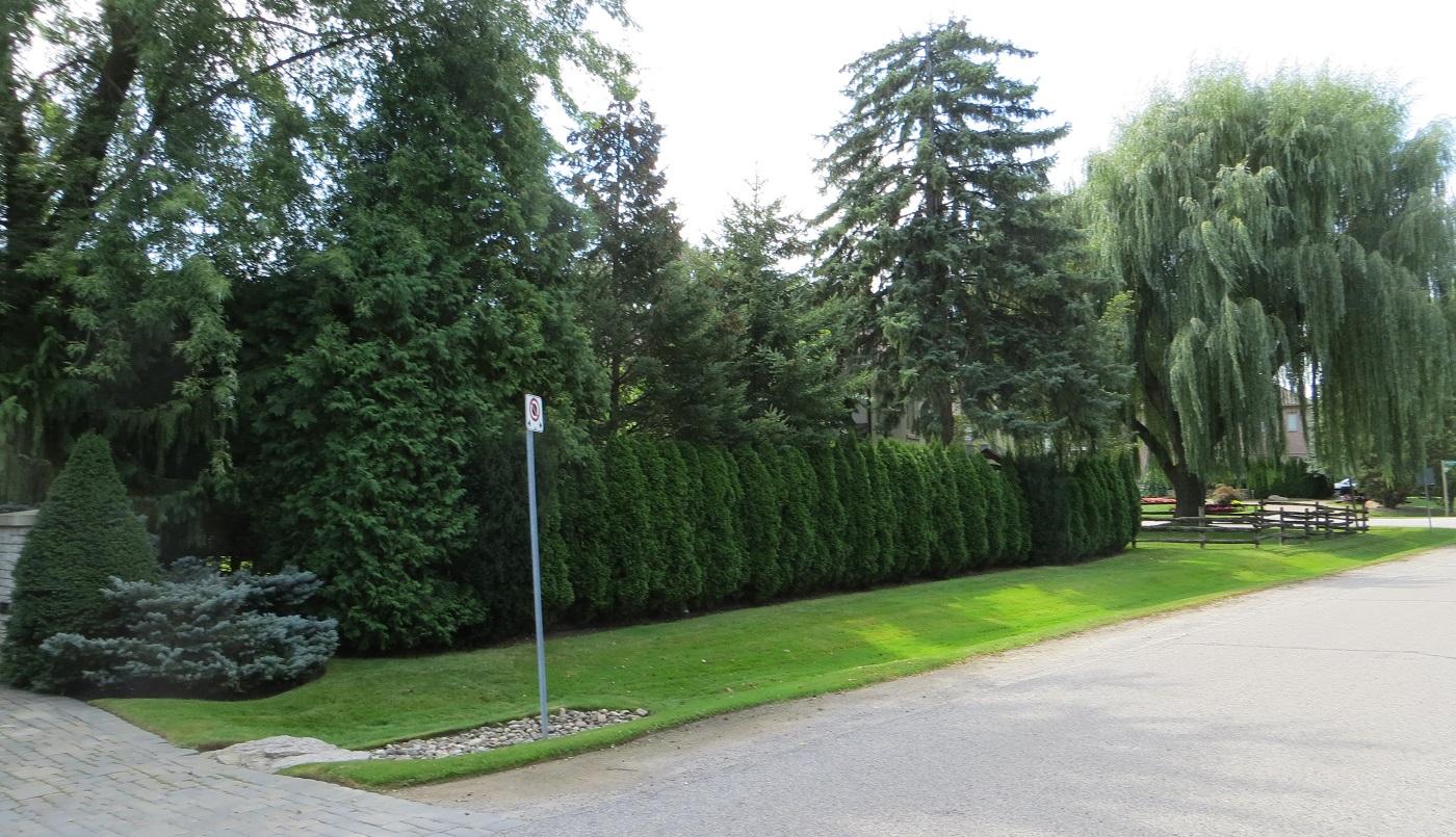 Bayview Glen neighbourhood streetscape