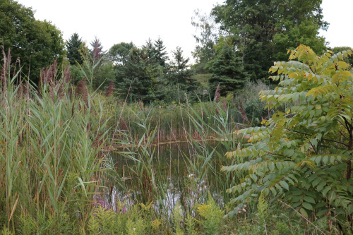Stephenson's Swamp