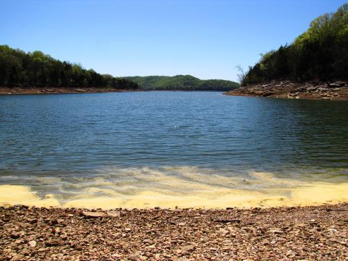 Pollen cluster in the water