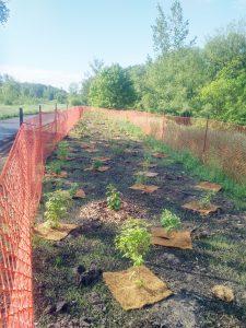 Site 2 community event plantings.