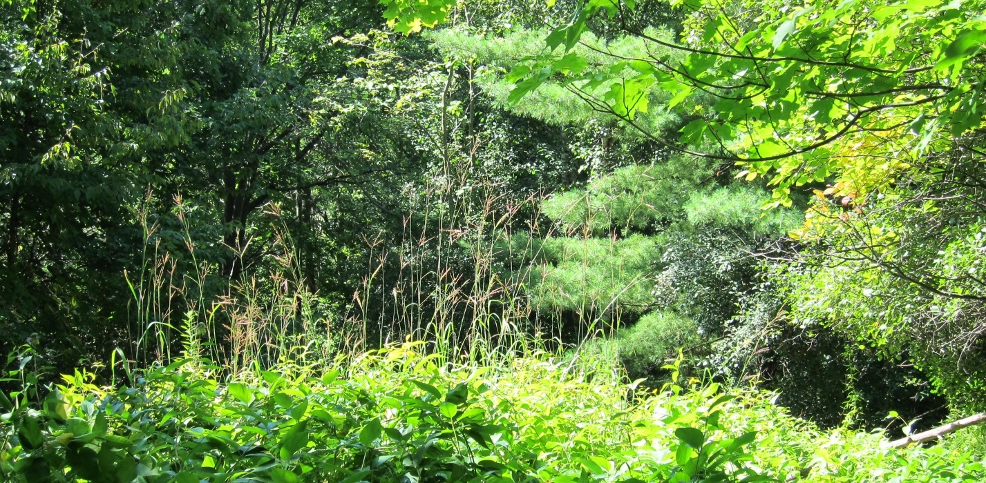 Mixed Oak–Pine Tallgrass Woodland is an example of local flora and fauna in TRCA watersheds