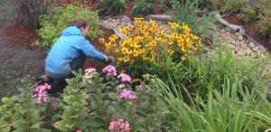 How to Plan a Successful Garden @ Online Webinar - General Audience