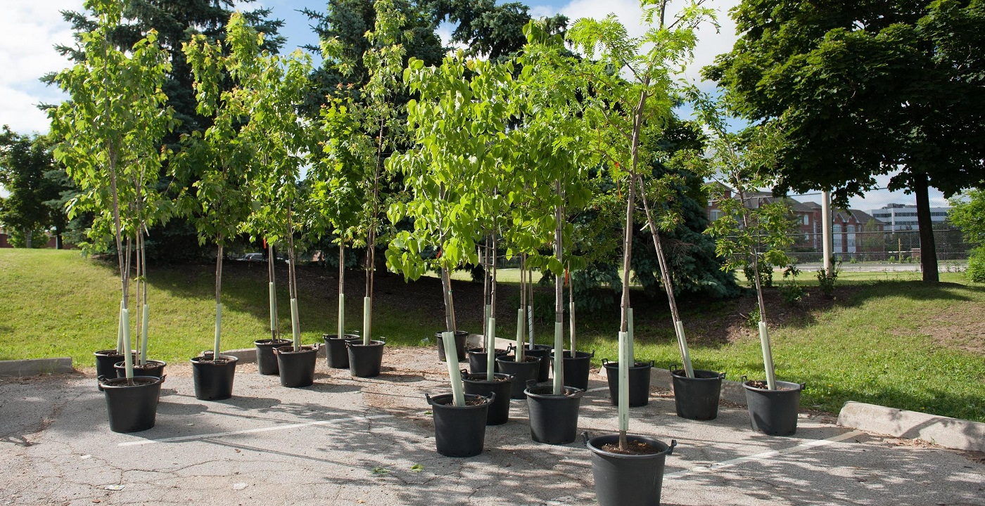 trees ready for planting