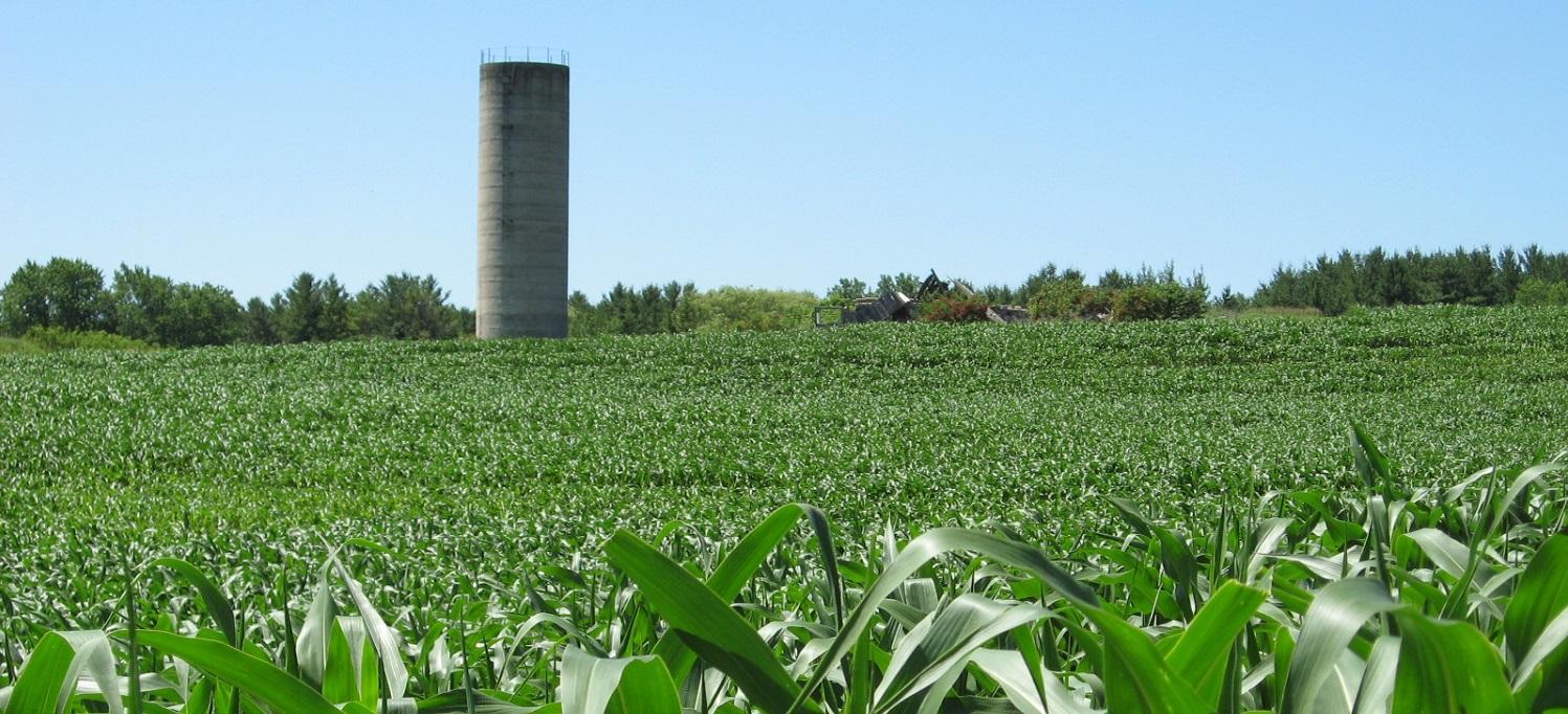 Farm in Durham Region