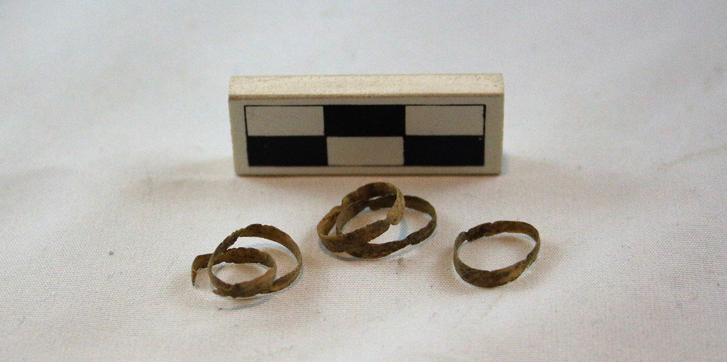 avian tracheal rings discovered by the TRCA Archaeology team