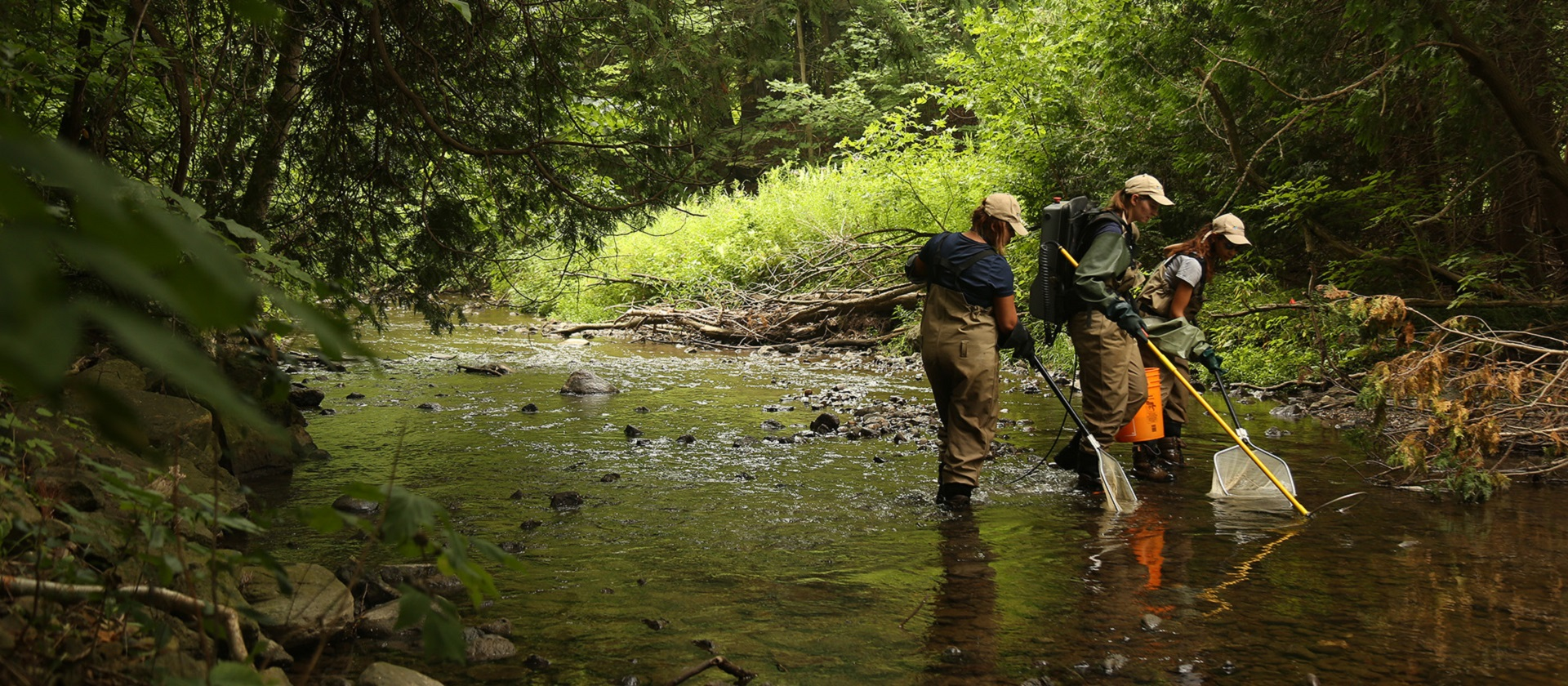 TRCA environmental monitoring staff electrofishing in a stream
