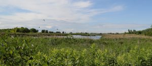 Walking Tour and Stewardship at Tommy Thompson Park with U of T