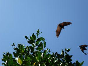 All About Bats @ Online Webinar - Ages 6+