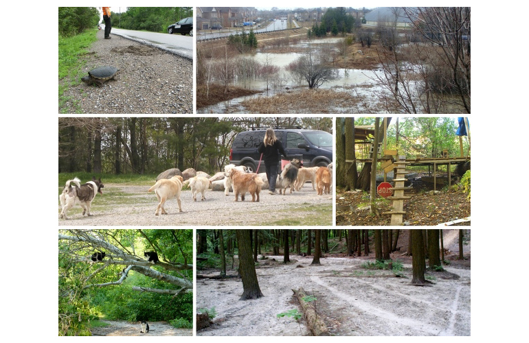 montage of images of urban wildlife