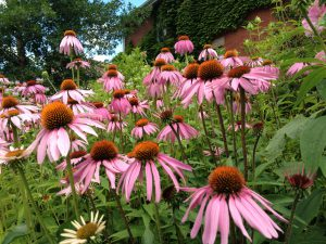 Spring into Native Plants @ Online Webinar - Ages 6+