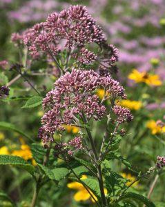 Beautiful Native Plants: Less Work, Less Water @ Online Webinar - General Audience