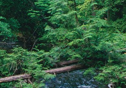Duffins Creek