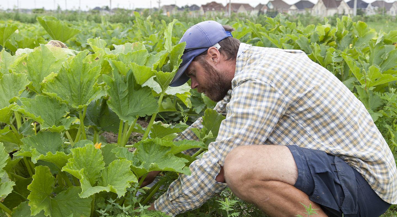 farmer tends field at McVean Farm