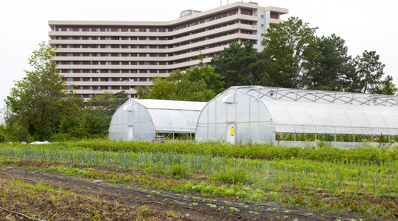field and greenhouses at Black Creek Community farm
