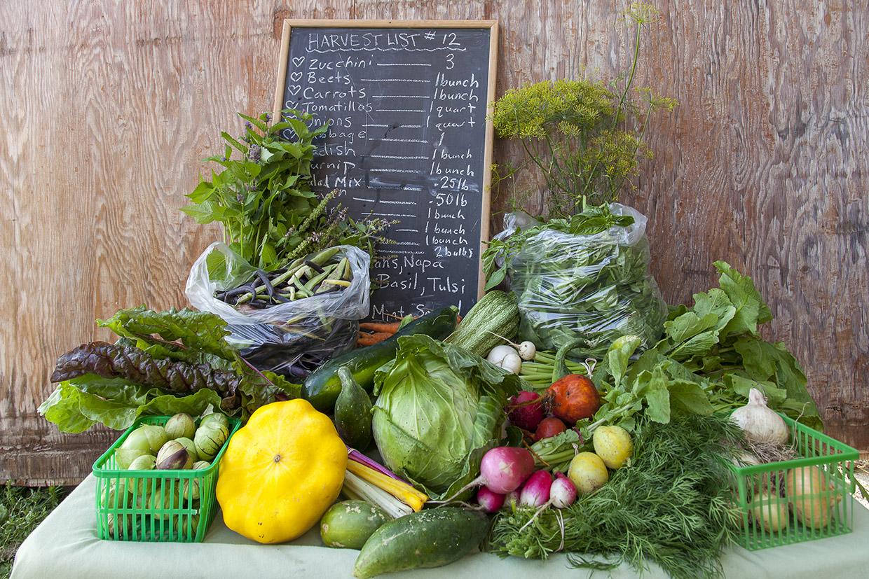 fresh produce on display at Albion Hills Community Farm