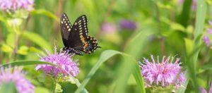 Gardening for Pollinators @ Online