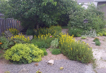 front yard with native plants