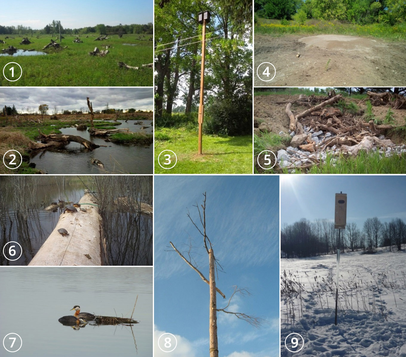 essential wildlife habitats used in TRCA restoration projects