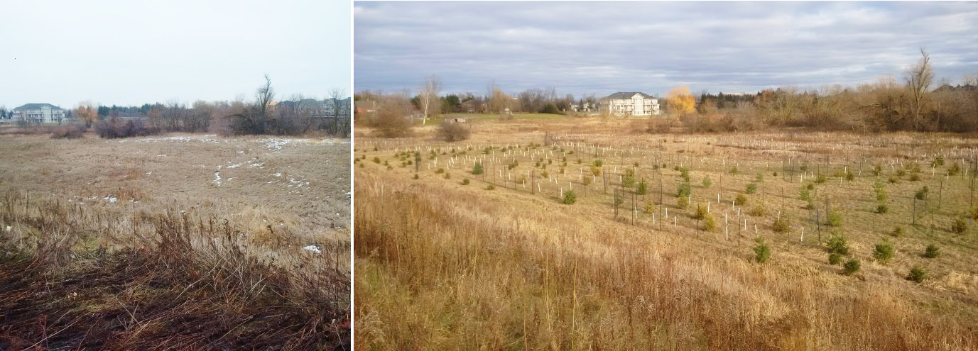 before and after images of Bellissimo compensation project in Brampton