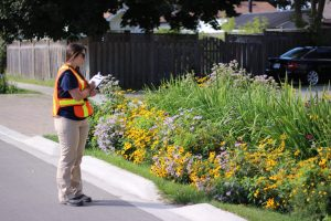 Strategies for developing green infrastructure operation and maintenance capacity in the City of Toronto @ Online