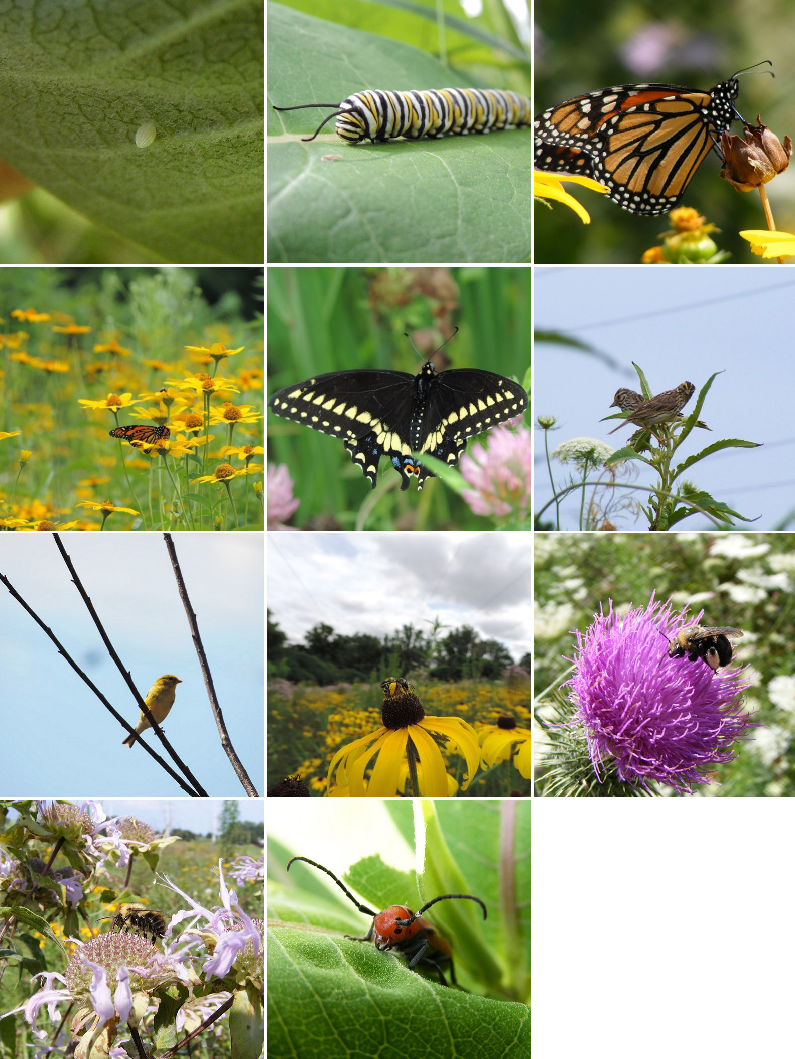 images of meadow wildlife