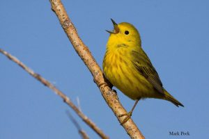Bird Sounds: Understand your Feathered Neighbours! @ Private Event - Ages 6+