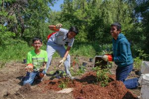 Youth Volunteer Event: Tree Maintenance @ Saigeon Trail (meet at entrance beside 19 Jonah Drive, Richmond Hill, ON L4E 4S8)