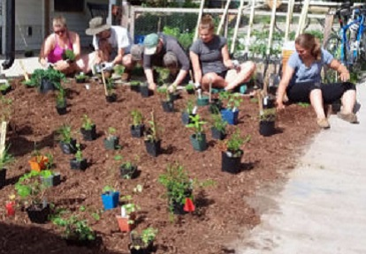 Sustainable Urban Neighbourhoods Planting event in Peterborough