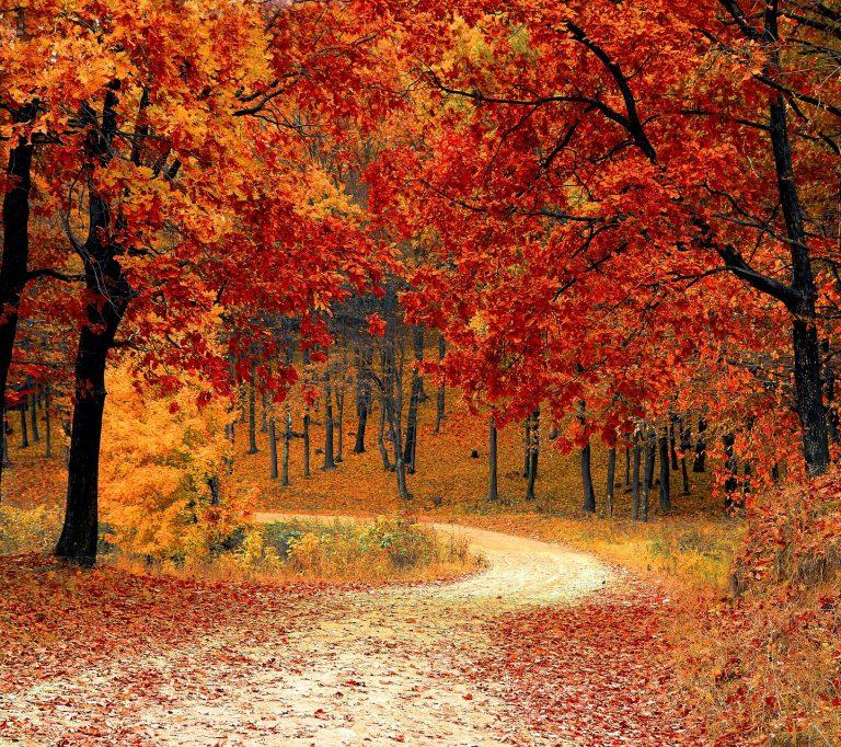 Fall colours, trail