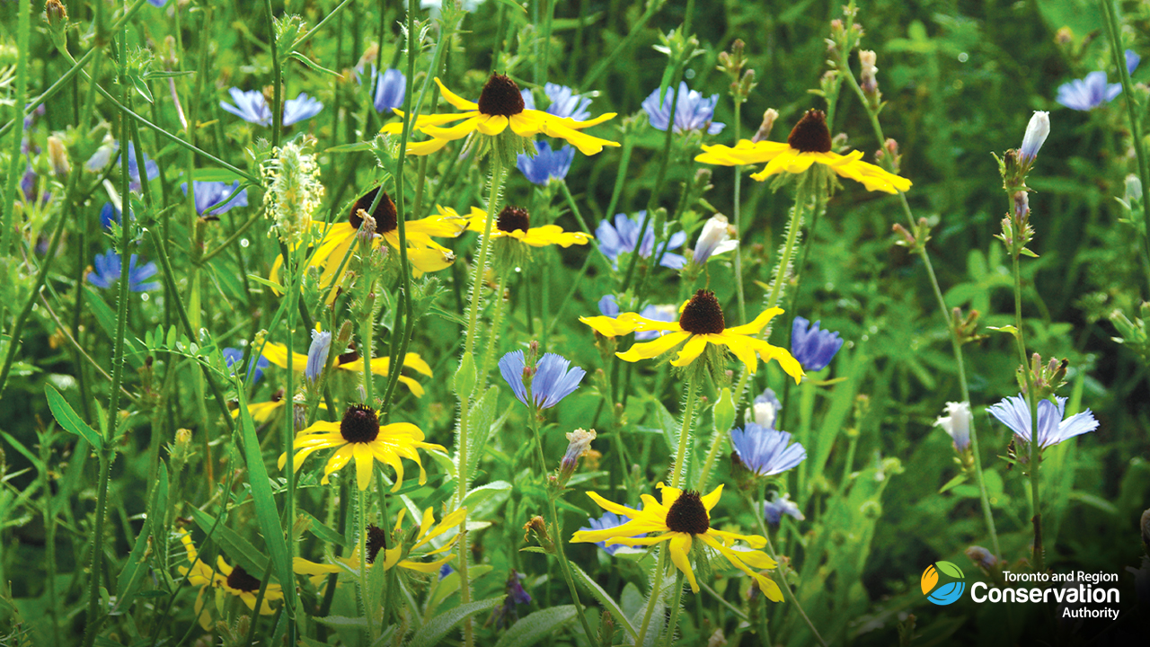 meadow wildflowers in bloom