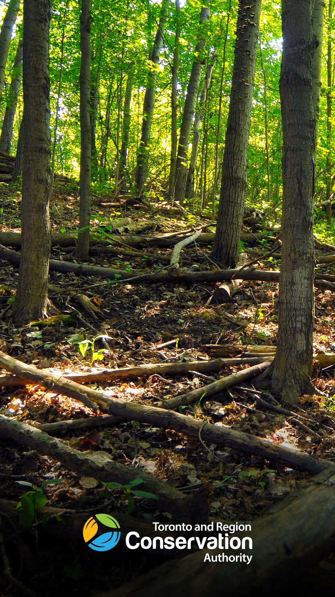 peaceful forest scene