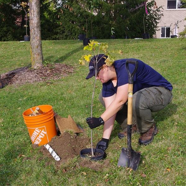 TRCA team member plants tree on residential property