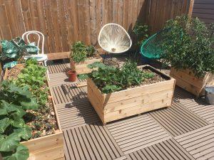 Sustainable Balcony Gardening @ Online Webinar - General Audience