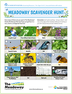 front page of TRCA Meadoway Scavenger Hunt e-learning resource