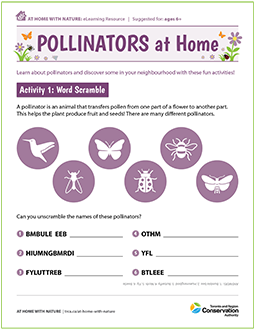 cover page of TRCA pollinators at home e-learning worksheet