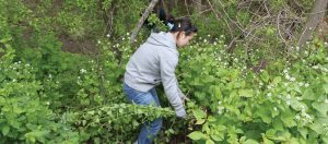 Durham Conservation Youth Corps - Winville Road parkette @ Duffin Heights Forest and River Trail