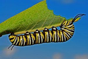 Milkweed to Monarchs @ Online Webinar - Ages 6+