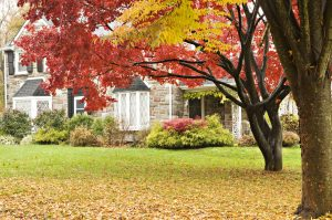 Winterize Your Lawn and Garden @ Webinar - General Audience