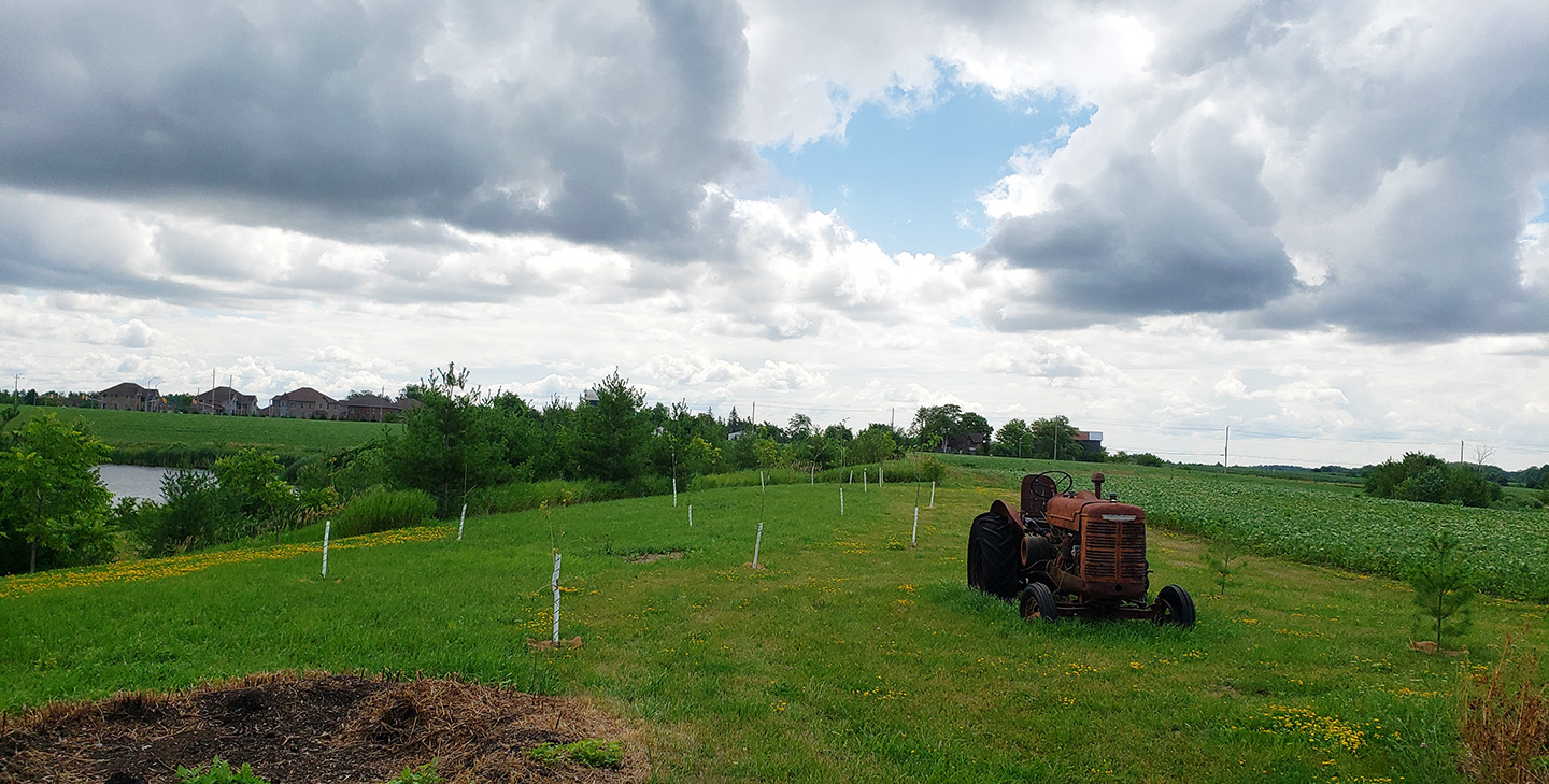 tree planting project in progress on rural property